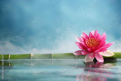 Photo Stands Water lilies Spa