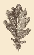 Oak Leaf Engraving Style, Vintage Illustration, Hand Drawn