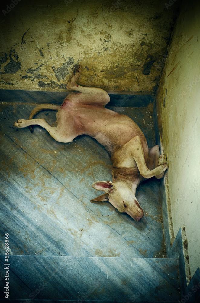 portrait of funny sleepling pet dog