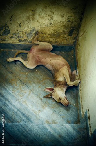 Fototapety, obrazy: portrait of funny sleepling pet dog