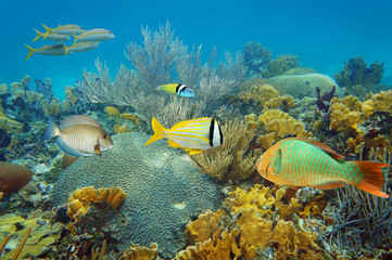 Underwater coral reef with colorful tropical fish