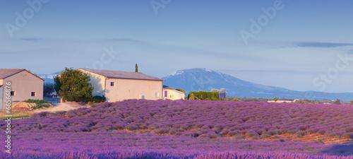 Valensole.Provence