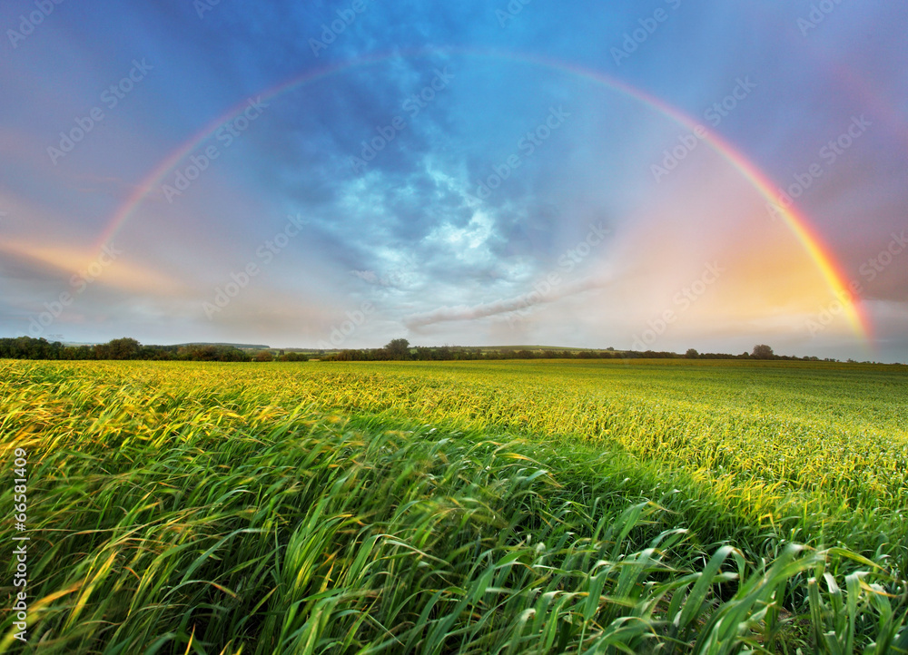 Fototapety, obrazy: Rainbow over spring field