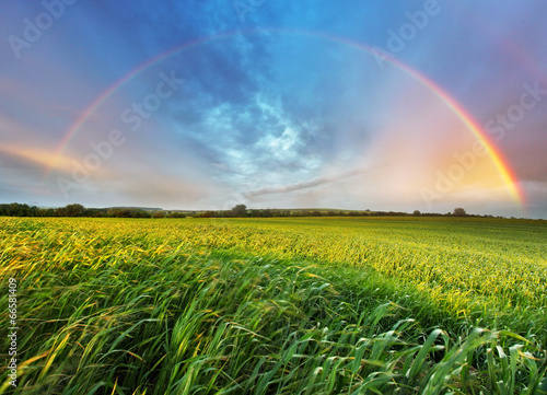 Poster Lente Rainbow over spring field