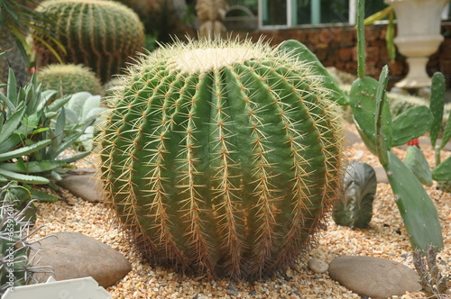 Spoed Foto op Canvas Cactus Cactus