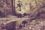 Autumn stream in the forest in sunny day vintage style