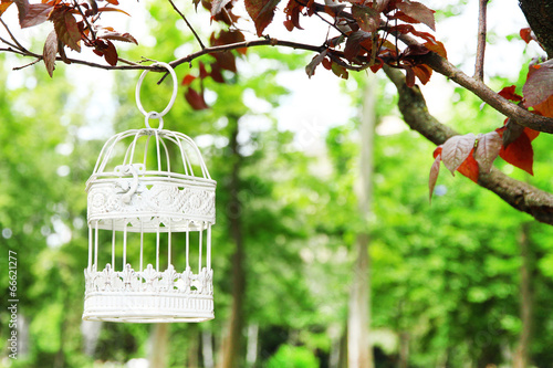 Fotografia  White vintage birdcage hanging on branch