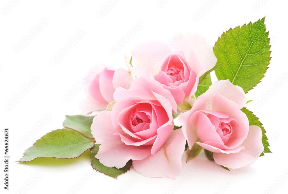 fotografía rosas rosadas europosters es