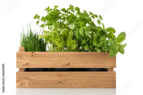 Fototapeta Kitchen herbs in wooden crate obraz