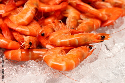 Papiers peints Coquillage boiled Shrimp