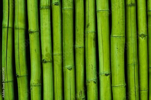 Bambusreihe grün