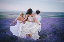 Three Women Posing In A Lavender Field
