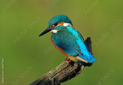 Photo Kingfisher on a branch 5