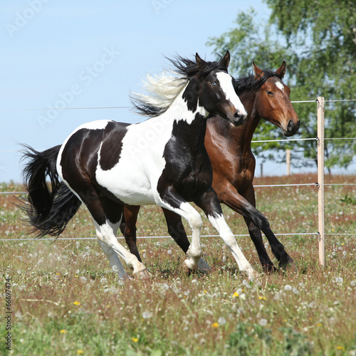 Obraz w ramie Two amazing horses running together