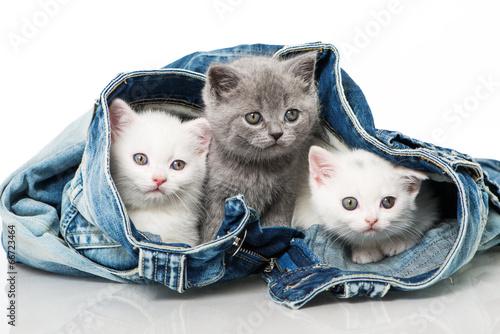 Vászonkép  Katzenbabies