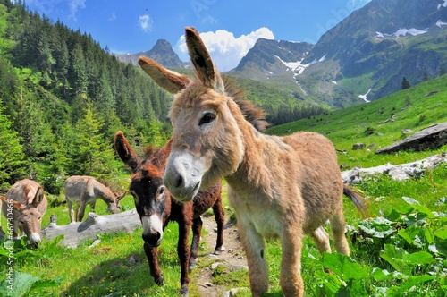 Mountain valey landscape with donkeys
