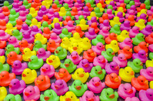 Colorful Duck Toy