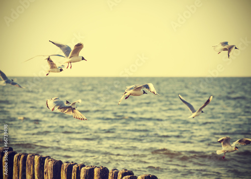 Fotomural  Filtered Vintage Retro Styled birds on the sea.