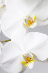 Panel Szklanywhite orchid