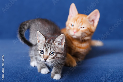Foto op Aluminium Kat Two kittens on blue background