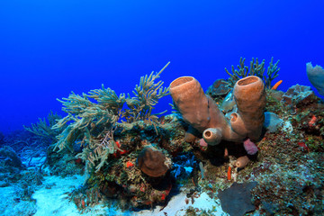 Tropical coral reef in the gulf of mexico
