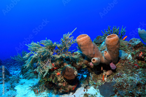 Staande foto Koraalriffen Tropical coral reef in the gulf of mexico