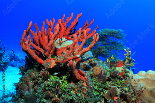 Keuken foto achterwand Koraalriffen Colorful tropical coral reef in the caribbean sea