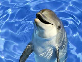 Fototapeta Delfin Portrait d'un dauphin commun