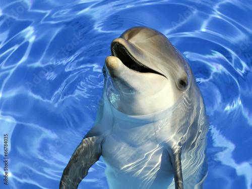 Papiers peints Dauphin Portrait d'un dauphin commun