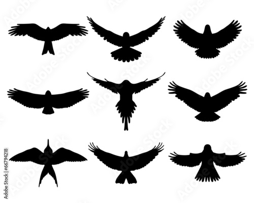 Black silhouettes of birds in flight, vector