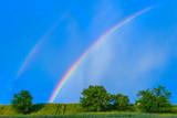 Fototapeta Tęcza - rainbow in a blue sky after the rain