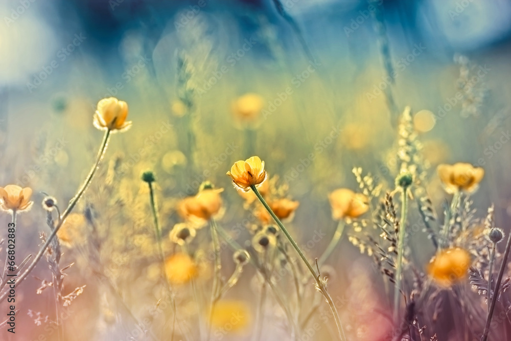 Fototapeta Beautiful nature - meadow flowers