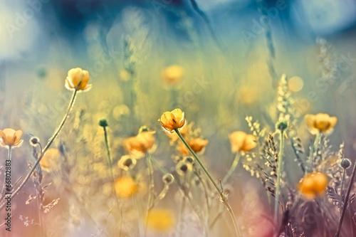 Fototapety, obrazy: Beautiful nature - meadow flowers