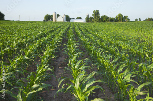 Fotografie, Obraz  Field of young corn with farm in background