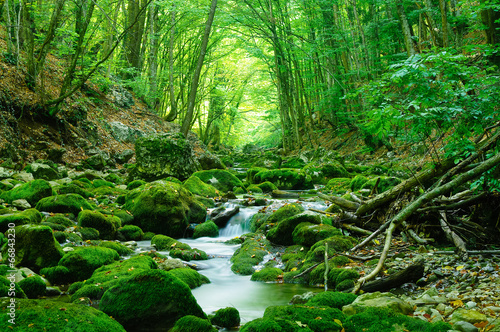 Photo Stands Forest river Deep wood
