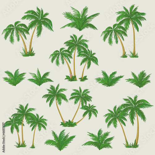 Photo Tropical palm trees set