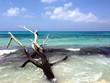 arbre échoué sur la plage