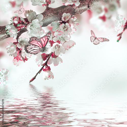 Naklejka na szybę Apricot flowers in spring, floral background