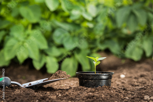 Papiers peints Jardin Young plant in a pot ready for planting