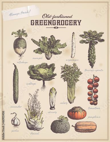 zielenina-3-zestaw-ilustracji-roslinnych