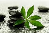 Fototapeta Kamienie - Kamienie bazaltowe z liściem