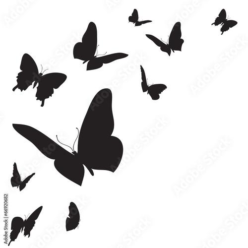 ciemne-motyle