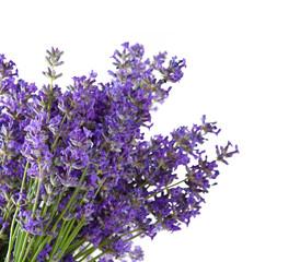 Fototapeta Lawenda Lavender blossoms isolated on white background