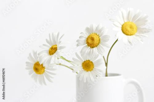 kwiat-rumianku-w-kubek-na-bialym-tle
