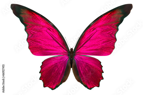 Foto op Plexiglas Vlinder beautiful butterfly isolated on white