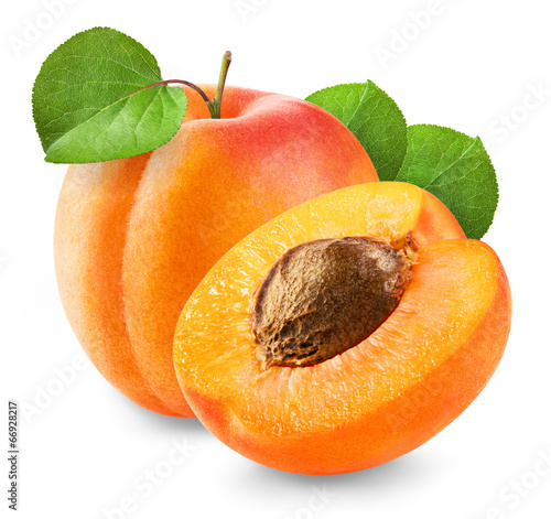 Fresh apricot Canvas Print