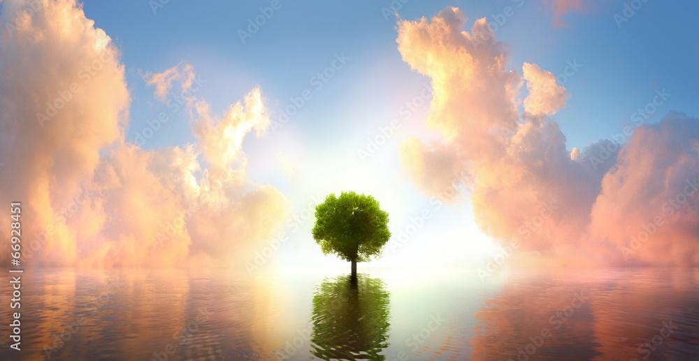 Fototapety, obrazy: Baum im See