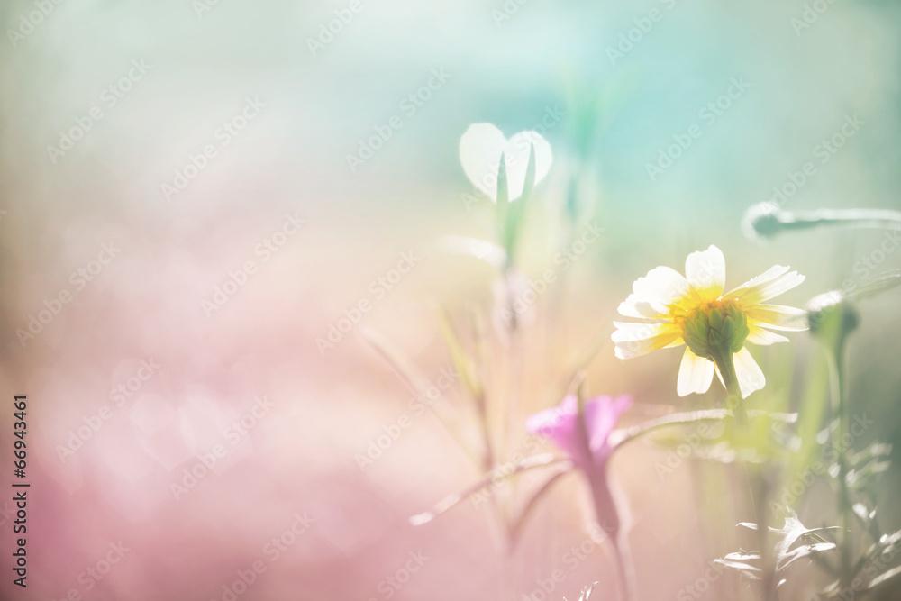 Fototapeta Liebe, Sehnsucht - abstrakter Hintergrund mit Blüte und Herz