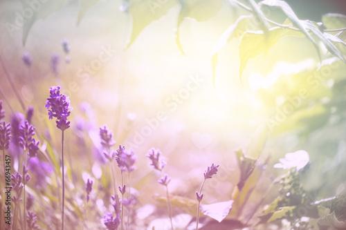 Foto op Canvas Lavendel Duftender Lavendel