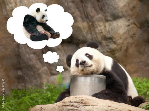 Plakat Uwielbiałem niedźwiedzia panda